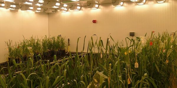 Plant Growth Rooms - Nijssen Australia - walk-in climatised plant growth rooms